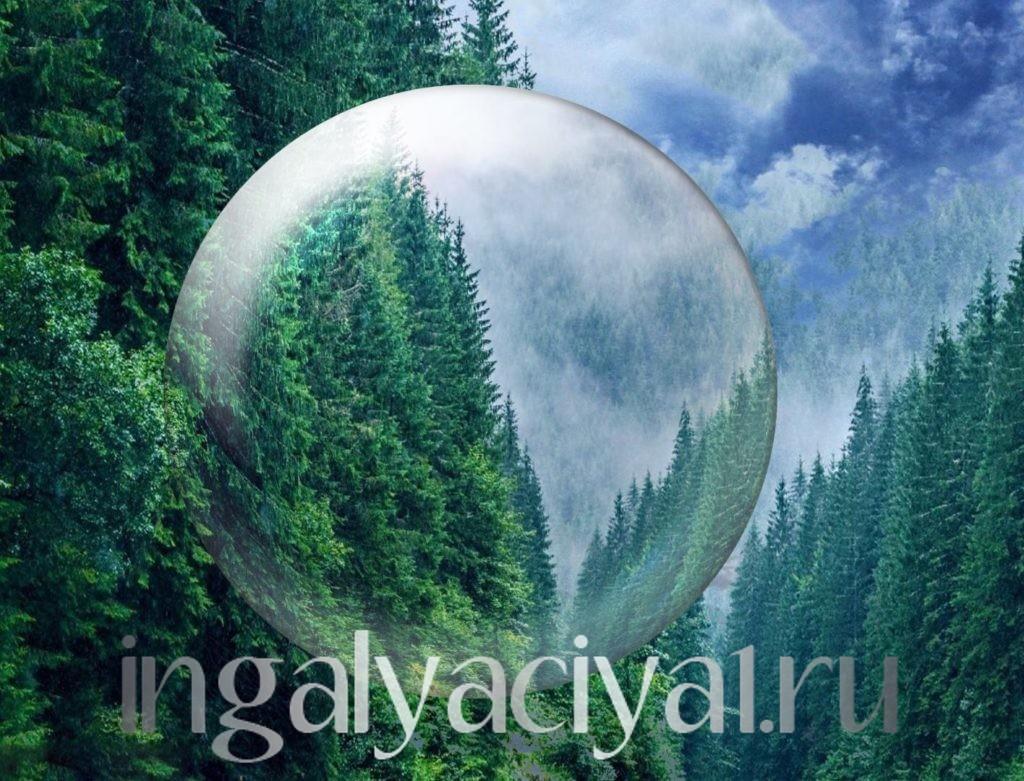 Свежий лесной воздух